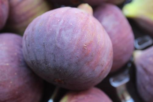 purple fresh fig