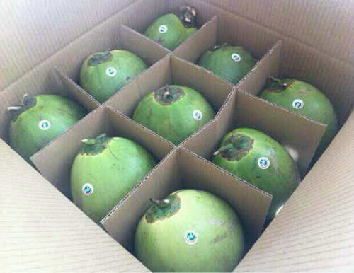 Green shell coconuts
