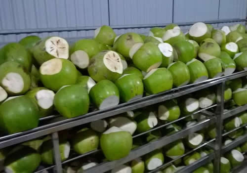 green shell young coconuts
