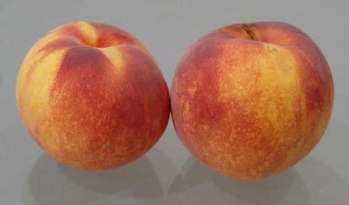 hale peaches