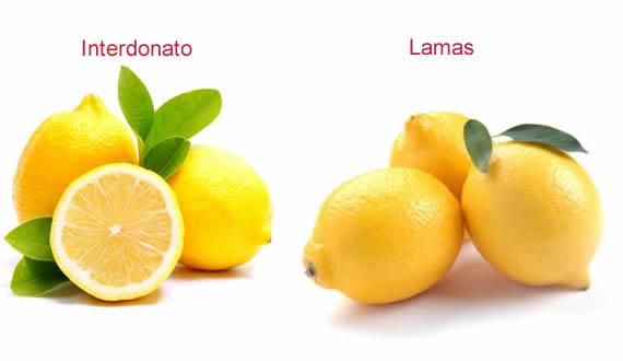 lamas and interdonato