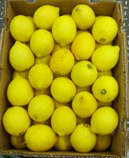 lamas lemon box