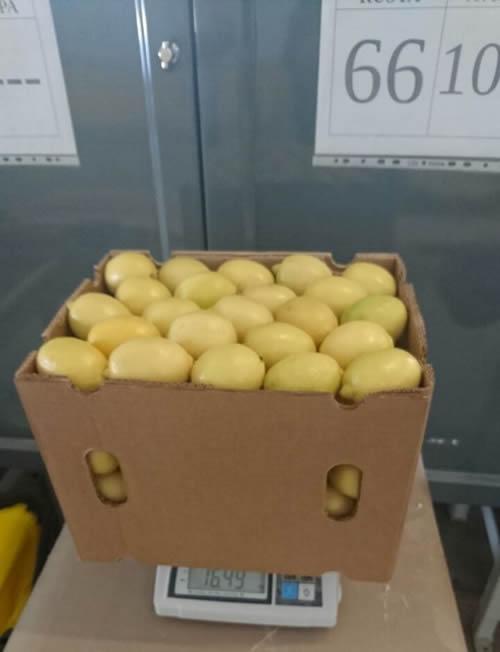 lemon weights