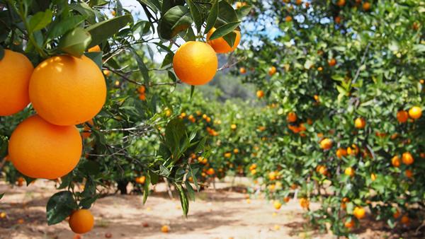 bilvigo orange