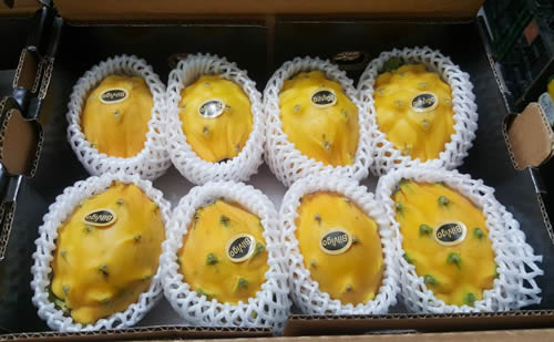 yellow pitahaya 7 pcs