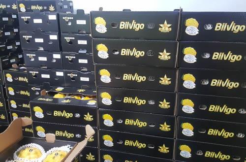 pitaya boxes