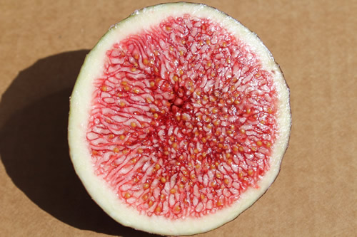 fresh fig slice