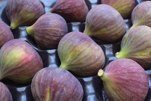 fresh fig 2017