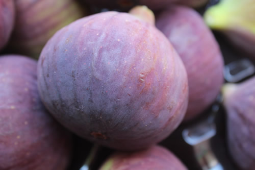 purple fresh fig