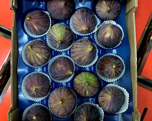 bilvigo fig loose package