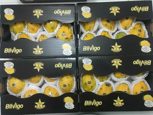 Bilvigo yellow Pitahaya