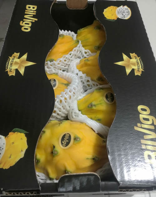 bilvigo premium dragon fruit