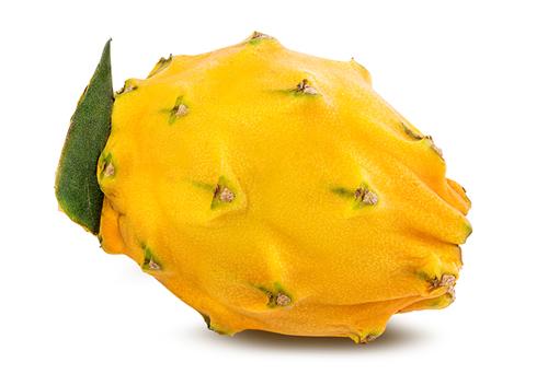 yellow pitahaya bilvigo