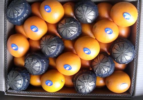 Egyptian Valancia Orange